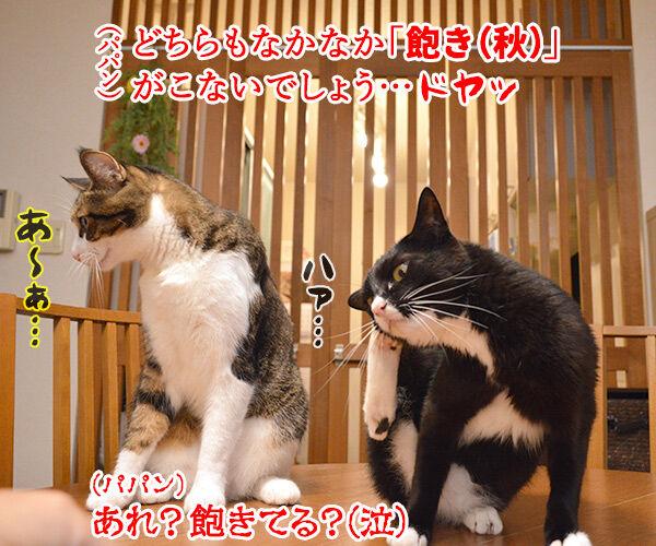 今日から4年目突入デースッ 猫の写真で4コマ漫画 4コマ目ッ
