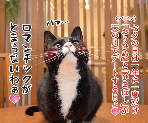 七夕 織姫と彦星が年に一度会える日 猫の写真で4コマ漫画 1コマ目ッ