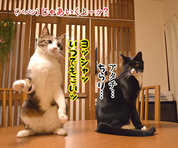 ねこじゃらしで遊びませんこと~? 猫の写真で4コマ漫画 2コマ目ッ