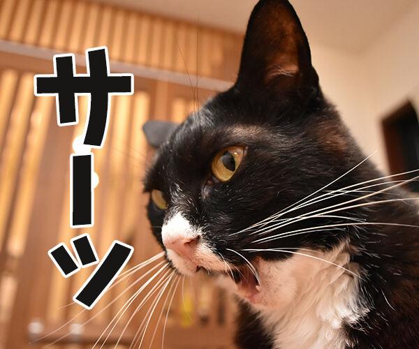 福原愛ちゃんがママになったんですってッ 猫の写真で4コマ漫画 1コマ目ッ
