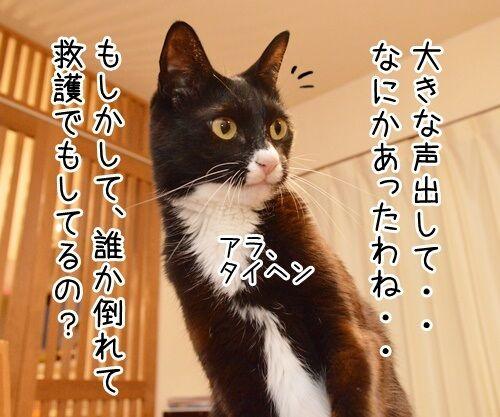 大きな声で呼びかけてッ 猫の写真で4コマ漫画 2コマ目ッ