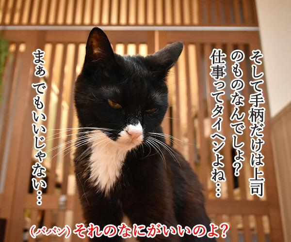 そのまんまパパンになんてイヤイヤーン 猫の写真で4コマ漫画 3コマ目ッ