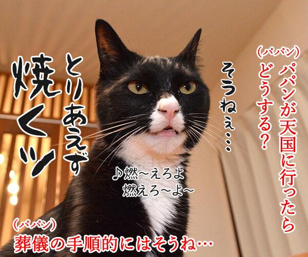 パパンが天国に行ったら 猫の写真で4コマ漫画 1コマ目ッ