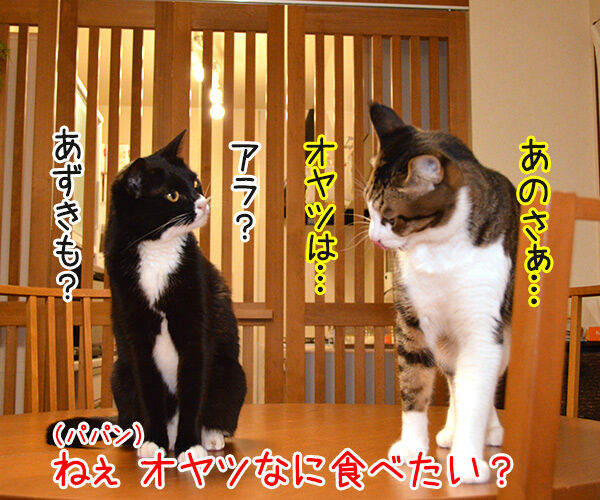 あッ… 猫の写真で4コマ漫画 3コマ目ッ