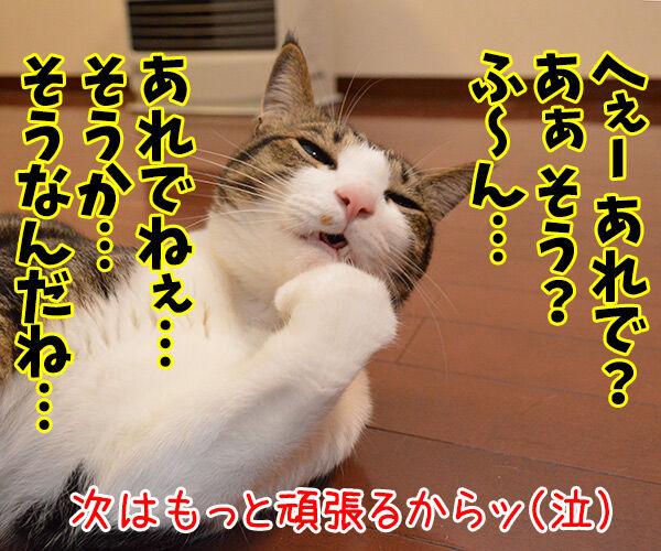 ねこと遊ぶということ猫の写真で4コマ漫画 4コマ目ッ