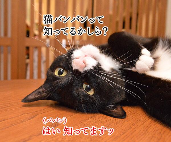 猫バンバン 猫の写真で4コマ漫画 1コマ目ッ