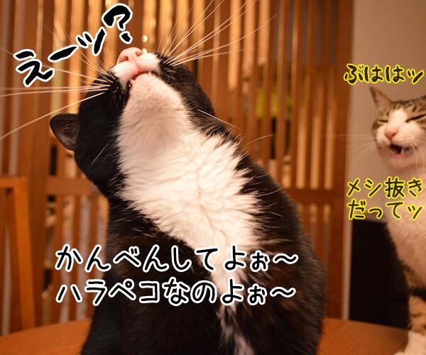 うっかりさん 猫の写真で4コマ漫画 3コマ目ッ