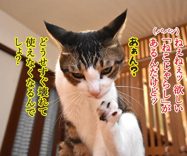 どうしても使ってほしいじゃらしがあるのッ 猫の写真で4コマ漫画 1コマ目ッ