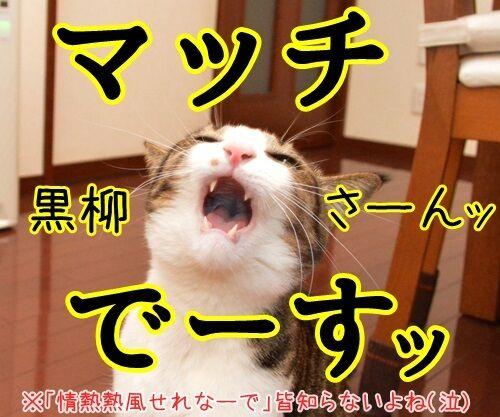 好きな言葉は情熱です。 猫の写真で4コマ漫画 4コマ目ッ