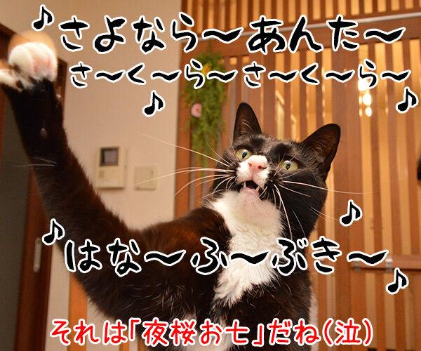 桜の季節だから『さくら さくら』を唄いましょーッ 猫の写真で4コマ漫画 4コマ目ッ
