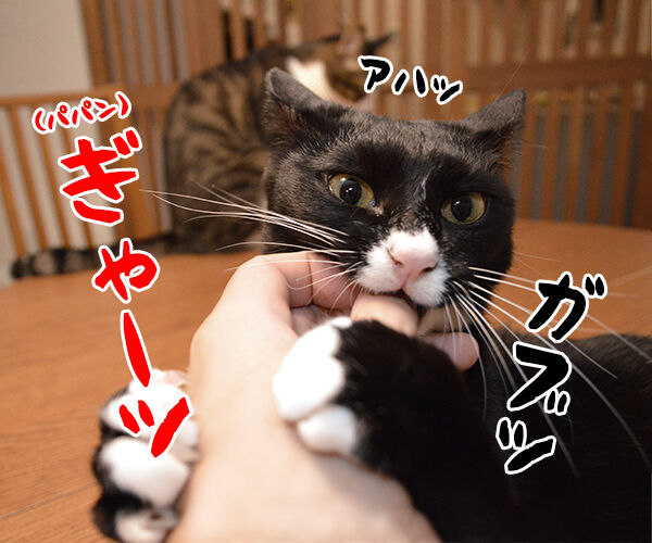 ガブリエル 其の一 猫の写真で4コマ漫画 2コマ目ッ