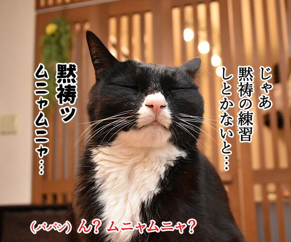 3月11日14時46分は みんなで黙祷を捧げるわよ 猫の写真で4コマ漫画 3コマ目ッ