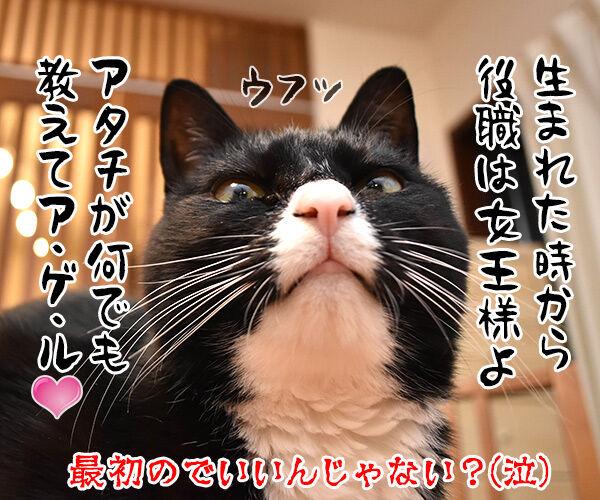 新人あいさつ 猫の写真で4コマ漫画 4コマ目ッ