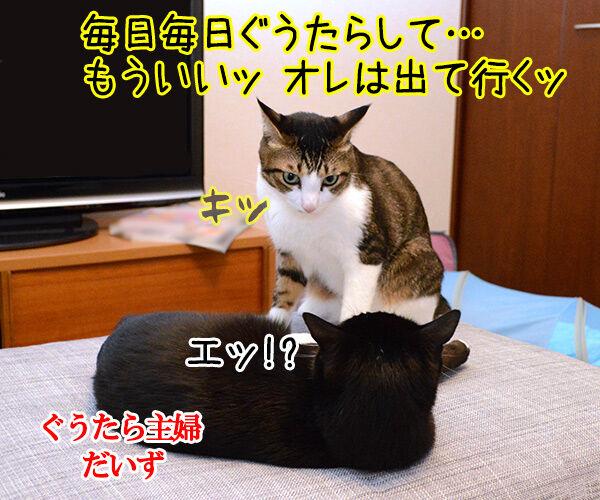 ぐうたら主婦 猫の写真で4コマ漫画 1コマ目ッ
