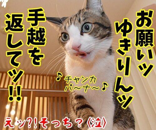 AKB柏○とNEWS手○の熱愛報道 猫の写真で4コマ漫画 4コマ目ッ