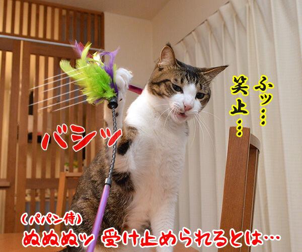 猫侍 其の四 猫の写真で4コマ漫画 2コマ目ッ