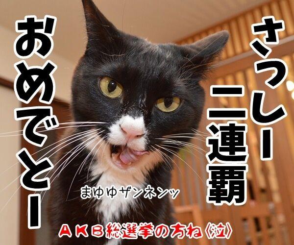 今日は父の日だもんねッ 猫の写真で4コマ漫画 4コマ目ッ