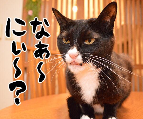イタい女がいたんですよぉ~ 猫の写真で4コマ漫画 2コマ目ッ