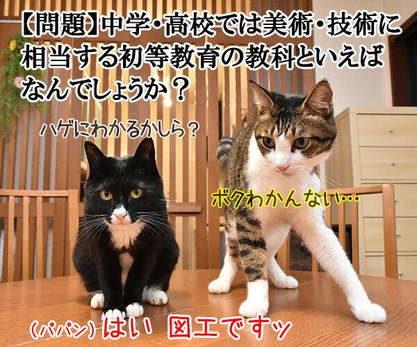 正解は図工でしょ? 猫の写真で4コマ漫画 1コマ目ッ