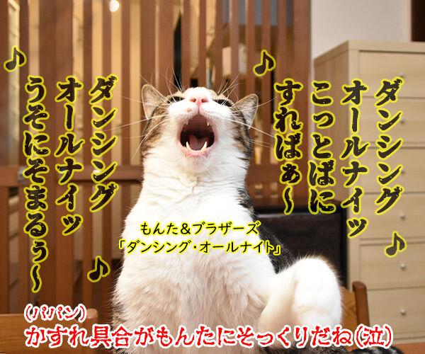 スケーリング(歯石除去)したら声がかすれちゃったのよッ 猫の写真で4コマ漫画 4コマ目ッ
