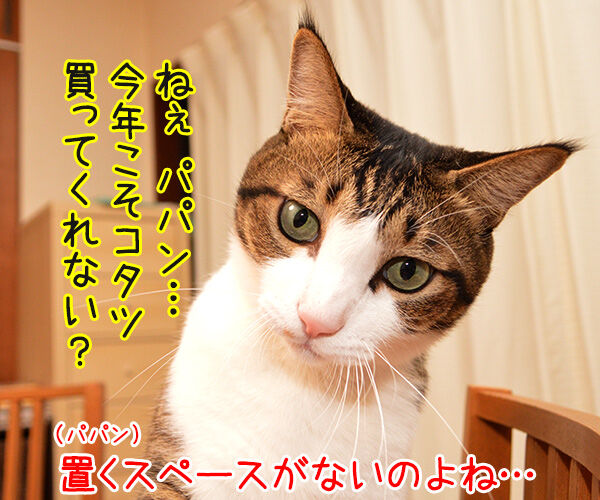 今年こそコタツ買ってくれない? 猫の写真で4コマ漫画 1コマ目ッ