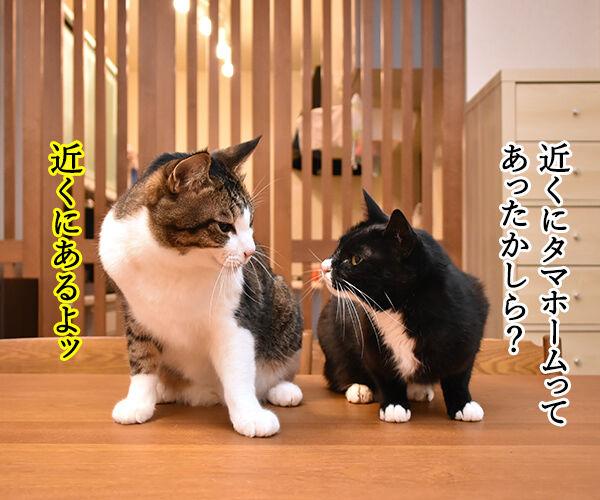 タマホームで建替えしましょうよッ 猫の写真で4コマ漫画 3コマ目ッ