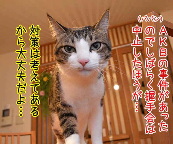 流し目王子の握手会 猫の写真で4コマ漫画 1コマ目ッ