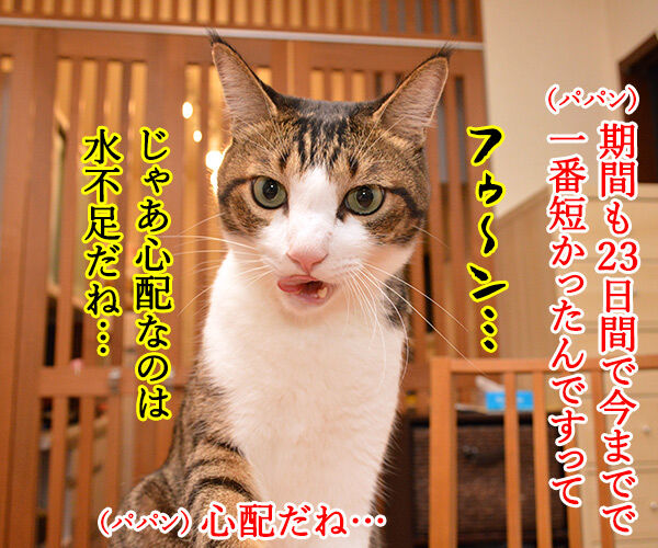 関東甲信地方は梅雨明けなんですってッ 猫の写真で4コマ漫画 2コマ目ッ