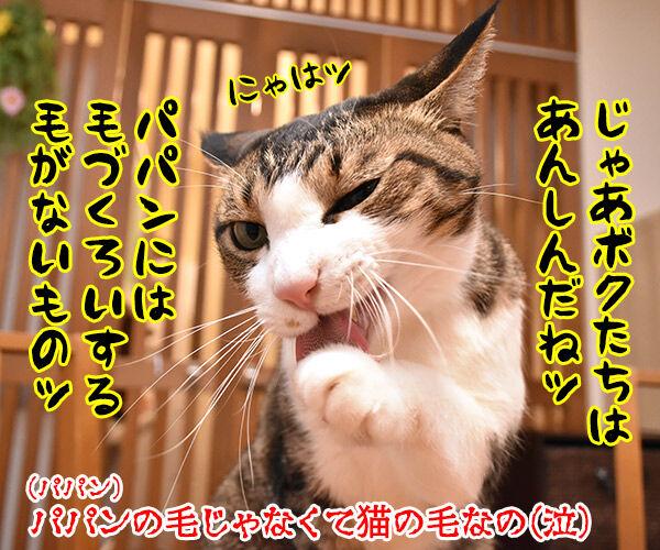 アレルギーっていろいろあるわよねッ 猫の写真で4コマ漫画 4コマ目ッ
