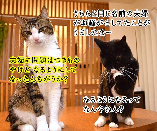 夫婦漫才 ミカとジョージ 猫の写真で4コマ漫画 2コマ目ッ