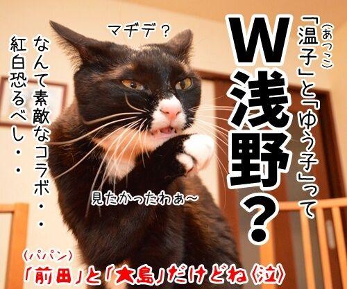 第66回NHK紅白歌合戦は紅組が勝利 猫の写真で4コマ漫画 4コマ目ッ