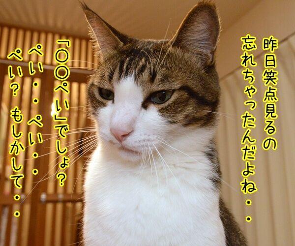 『笑点』大喜利の新メンバー決定!! 猫の写真で4コマ漫画 3コマ目ッ