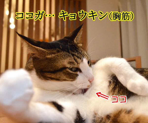 スベテ キタエレバ キミモ… 猫の写真で4コマ漫画 1コマ目ッ