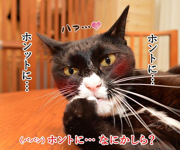 大谷翔平くんて… 猫の写真で4コマ漫画 3コマ目ッ