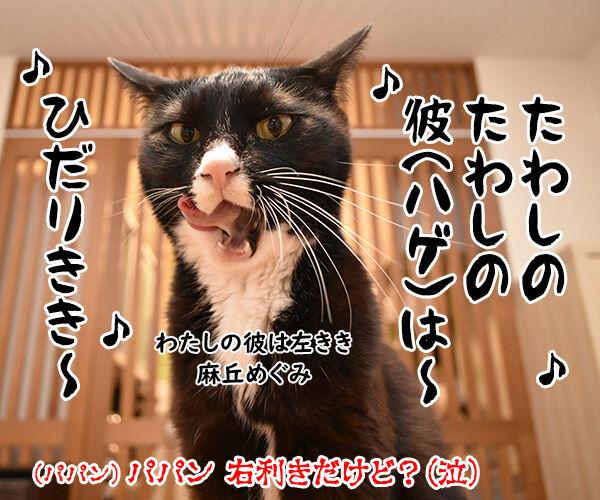 猫用たわしでブラッシングしたら? 猫の写真で4コマ漫画 4コマ目ッ