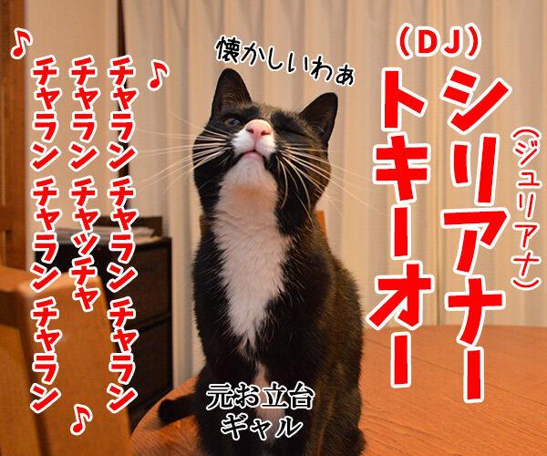 しりあな 猫の写真で4コマ漫画 3コマ目ッ