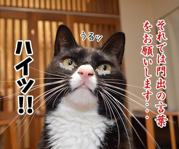 門出の言葉「僕たち、わたしたちは……」 猫の写真で4コマ漫画 1コマ目ッ