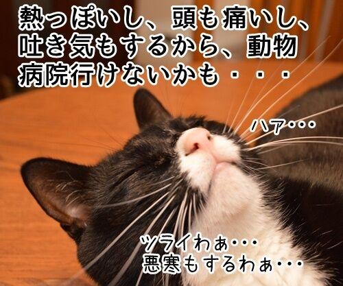 予防接種の日 猫の写真で4コマ漫画 2コマ目ッ