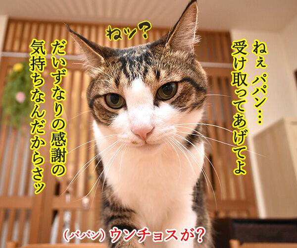 父の日なんて超ウンチョス 猫の写真で4コマ漫画 3コマ目ッ