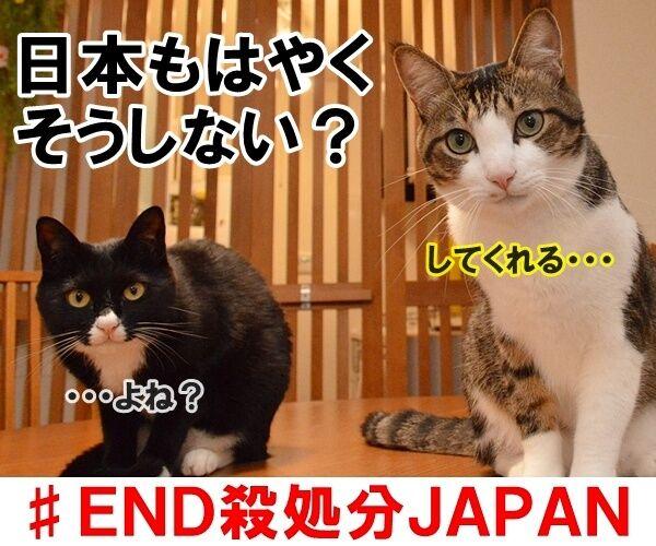 殺処分はゼロがいいわよね 猫の写真で4コマ漫画 4コマ目ッ