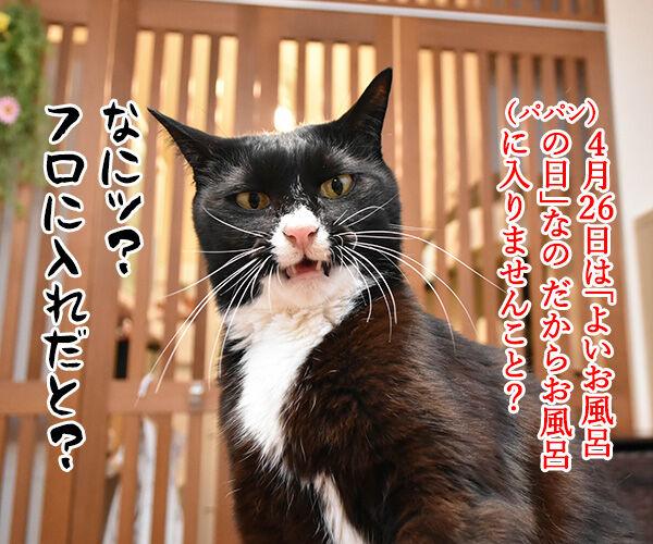 4月26日は『よい風呂の日』なんですってッ 猫の写真で4コマ漫画 1コマ目ッ