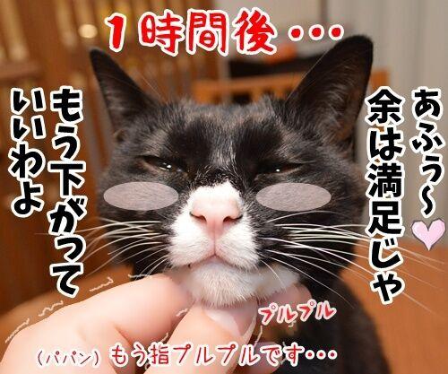 そこのハゲ、コチョりなさいッ 猫の写真で4コマ漫画 3コマ目ッ