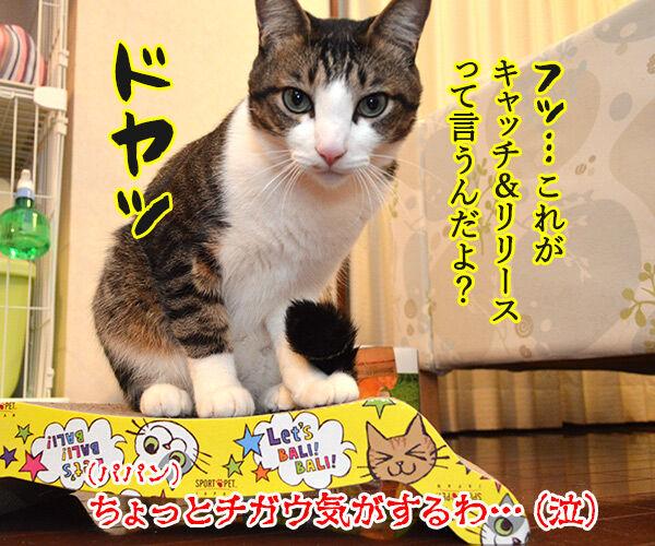 キャッチ アンド… 猫の写真で4コマ漫画 4コマ目ッ