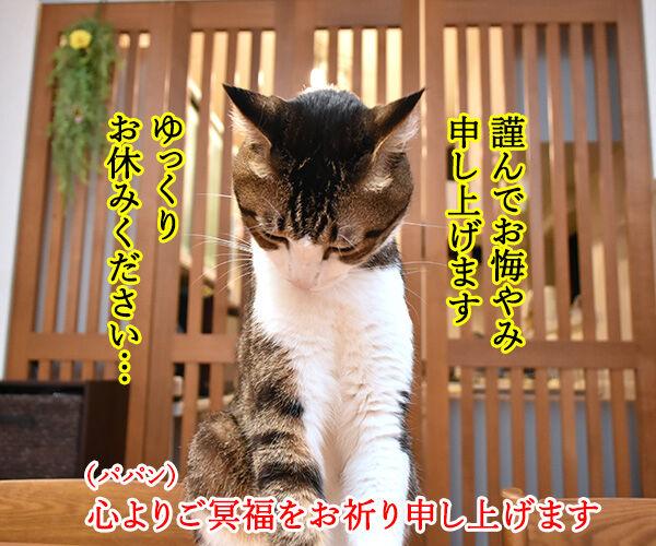 ジャニー喜多川さんのご冥福を心よりお祈り申し上げます 猫の写真で4コマ漫画 2コマ目ッ