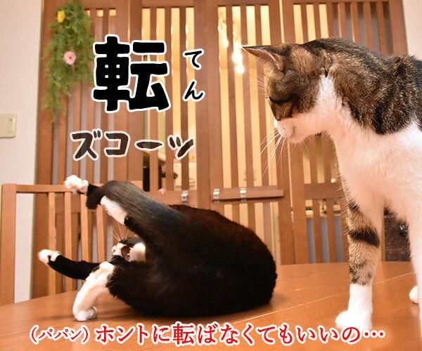 4コマまんがの基本といえば? 猫の写真で4コマ漫画 3コマ目ッ