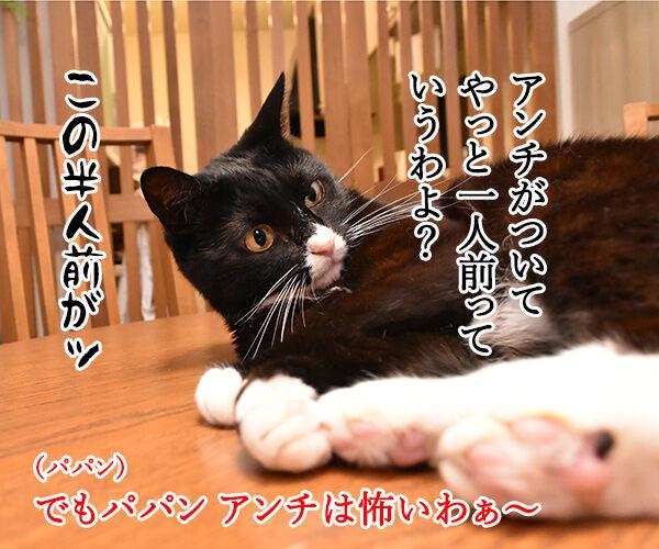 パパンのブログって… 猫の写真で4コマ漫画 3コマ目ッ