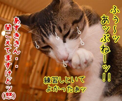悪いコは… 猫の写真で4コマ漫画 4コマ目ッ