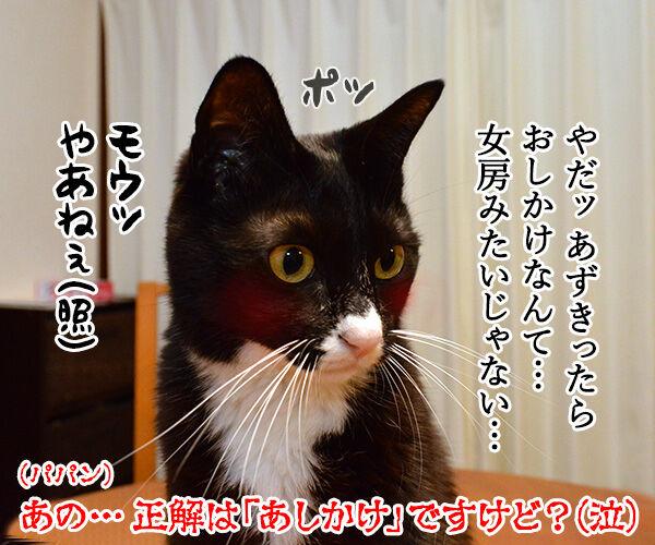一緒に暮らしてもう何年? 猫の写真で4コマ漫画 4コマ目ッ