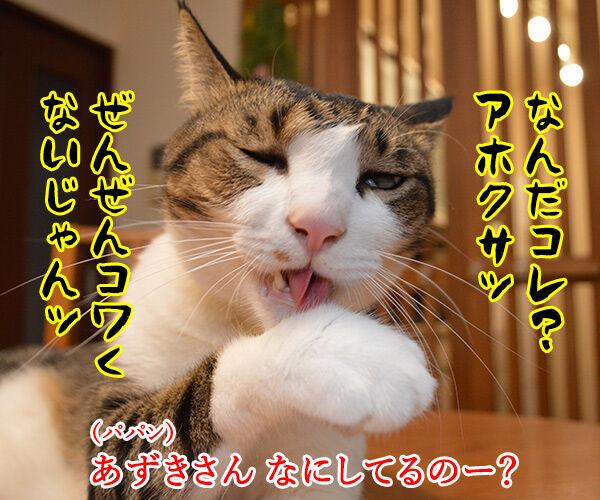 パパンちの怪談 猫の写真で4コマ漫画 3コマ目ッ