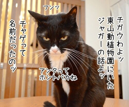 あのチャゲが…… 猫の写真で4コマ漫画 3コマ目ッ
